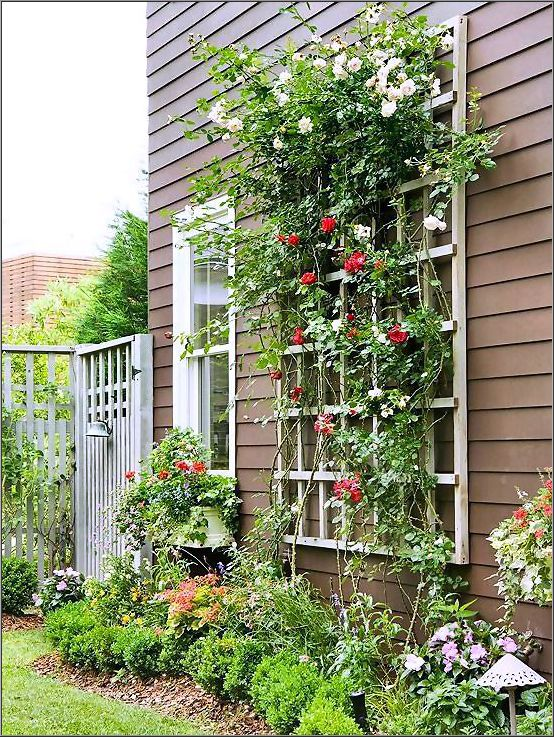 How to Trellis - Tips for Your Garden
