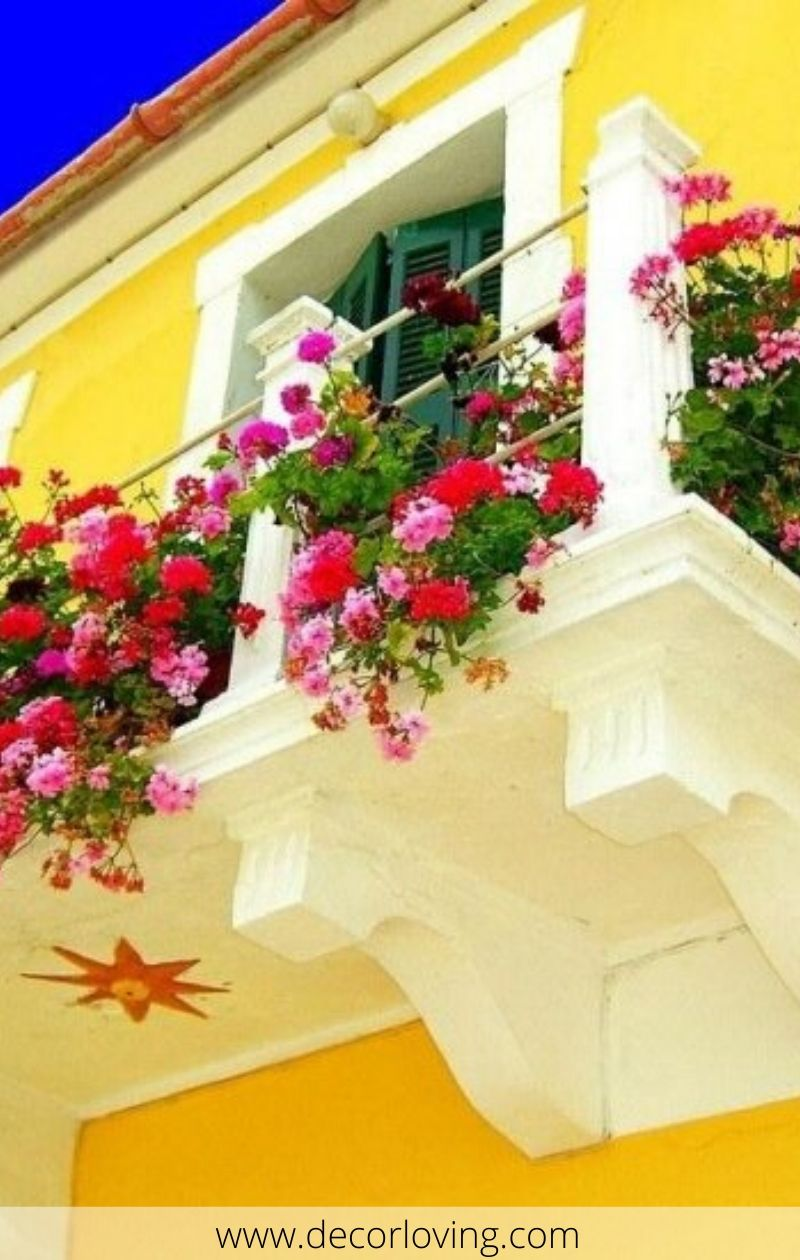 Balcony Plants Ideas